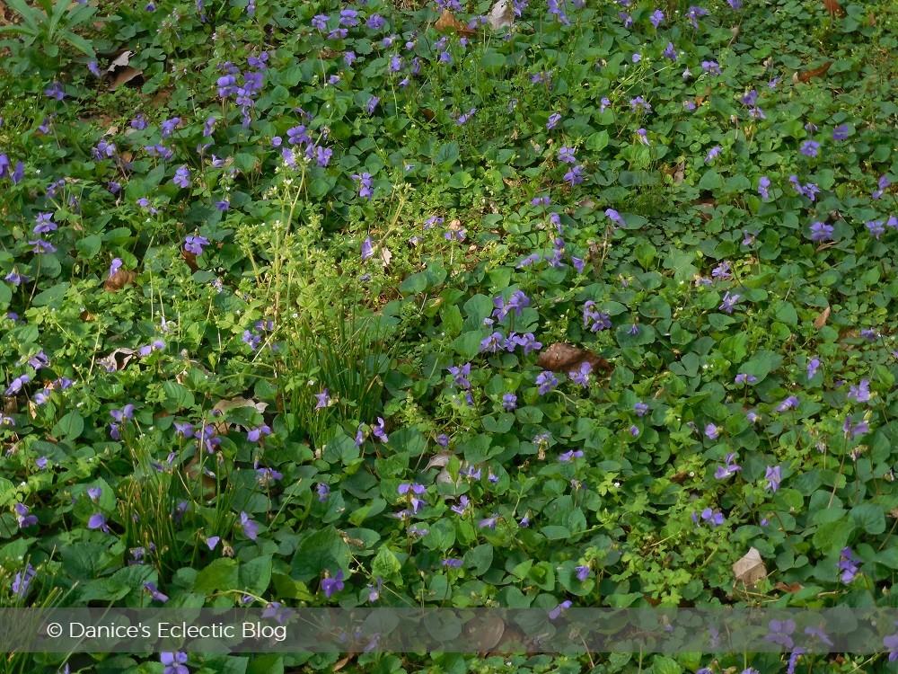 ©DSG lilac yard flowers