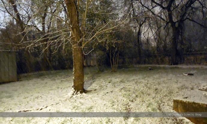 snowy back yard ©DSG